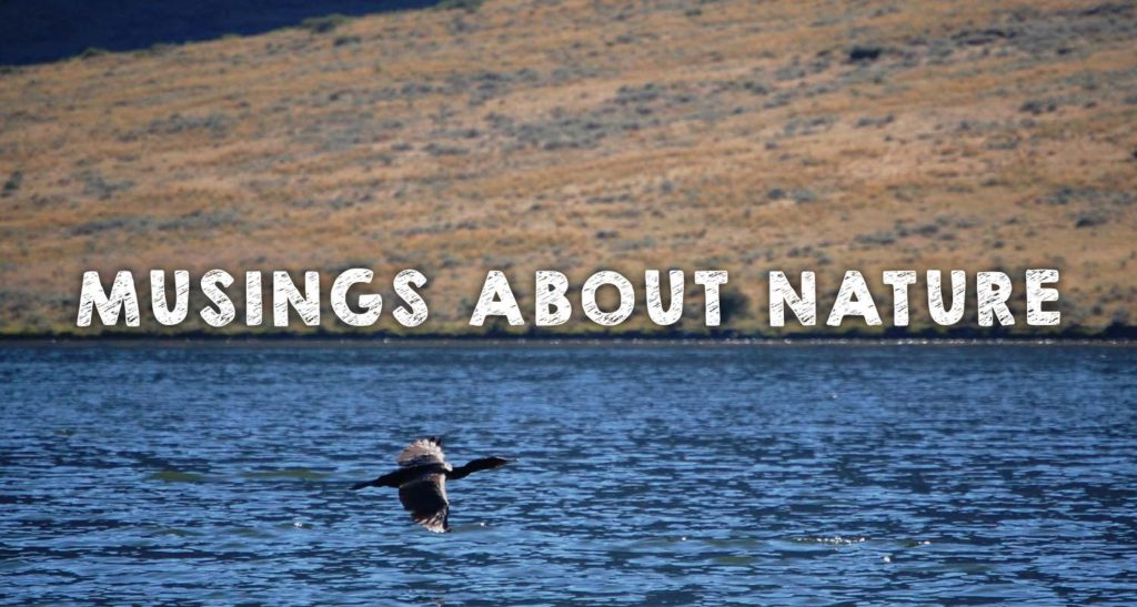 Musings About Nature