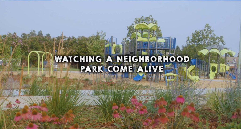 Watching a Neighborhood Park Come Alive
