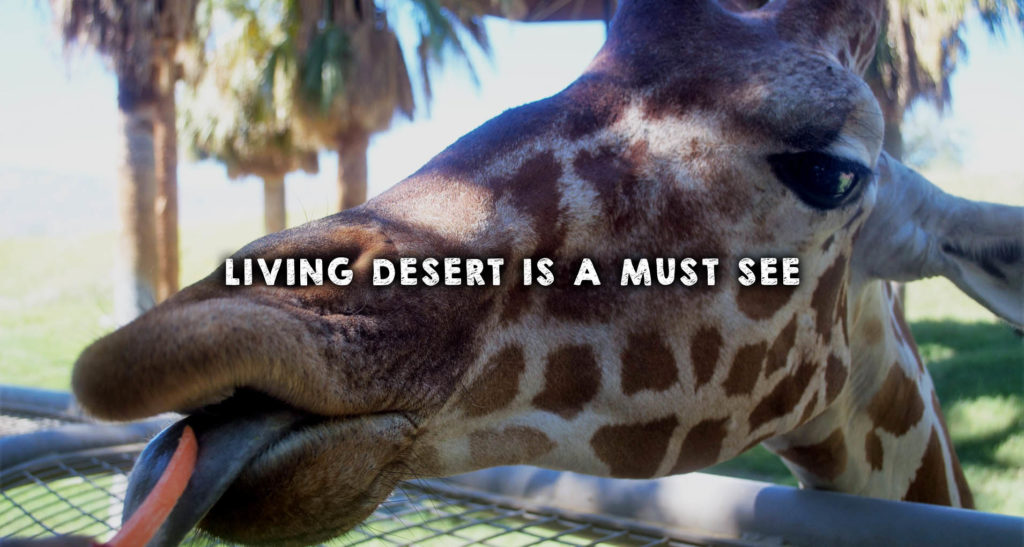 Living Desert is a Must See